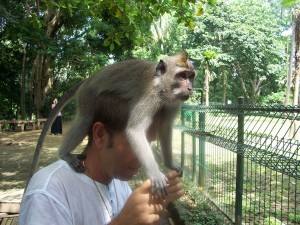 Monkey-Forest-7
