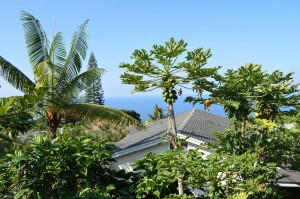 Organic-Hawaiian-Vacation-Guest-House