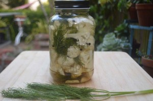 Fermented Cauliflower and Dill